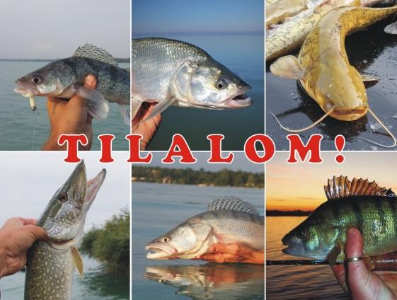 tilalom3_1
